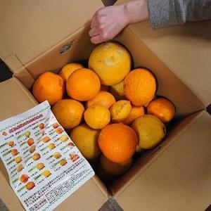 お気に入り、柑橘ミックス
