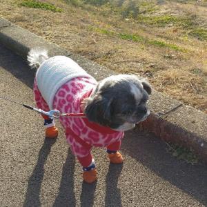 寒かった散歩