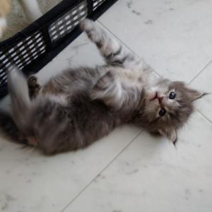 かびごん家保護猫さんたちの近況
