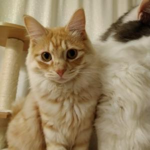 かびごん家の若もにょ保護猫さんたち