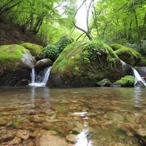 癒しの森…新緑に癒されてきました…