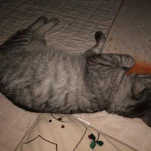 猫ちゃんドッキリ