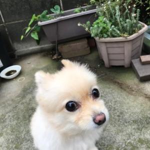 キアゲハ軍団 現る!!