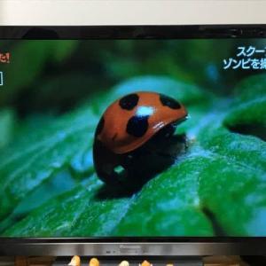 てんとう虫と寄生蜂