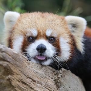 そろそろ梅雨明け?!本格的な夏休みの始まりです、みんなで浜松市動物園に行ってみよう♪