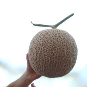 贈答用のフルーツの代名詞メロン!メロンを美味しく食べる4つのポイント