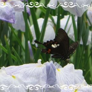 パッチワークと蝶々