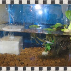 土用のウナギと水槽