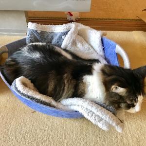 夏に買ったベッドや、猫草のこと。