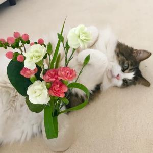 たまには、お花と共に。