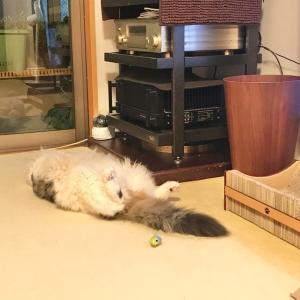 ネズミさん、ご機嫌。