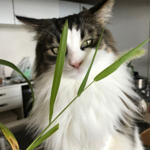 猫じゃらしくんから猫草くんへ。