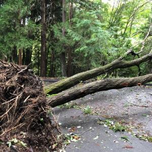 台風19号の爪痕 わが家の被害(一夜明けて)