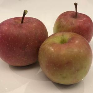 林檎を収穫