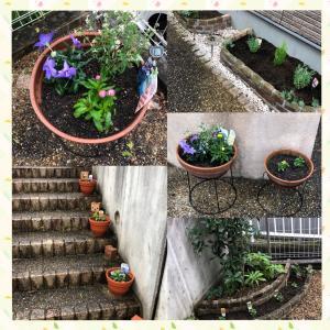 花の植替えとイチゴの植え付け