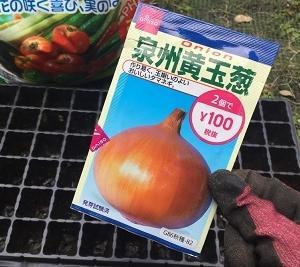 冬野菜準備!ダイソーの玉ねぎの種を蒔く(ポット栽培始めます)