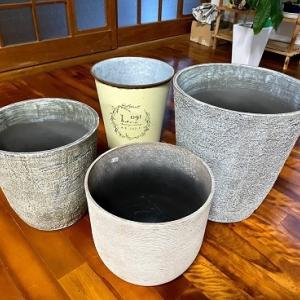 ガーデンカルチャー幸田!!アプリクーポンで観葉植物用の鉢をゲット