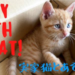 実家にやってきた仔猫の動画を作りました😊😻青い目のマロンくんです!!!