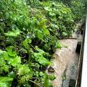 大雨続いています‥!!昨夜は避難😢山から流れる水の量も多く、近くで小さな土砂崩れも💦