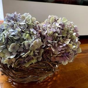 庭の紫陽花を剪定!吊るしてドライフラワーを作っています🌸