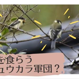 シジュウカラ軍団現る?数羽のシジュウカラを撮影でき、動画を作りました😄