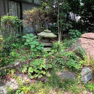 梅雨も明け、雑草生えまくる和の庭。暑さに負けず手入れ開始!