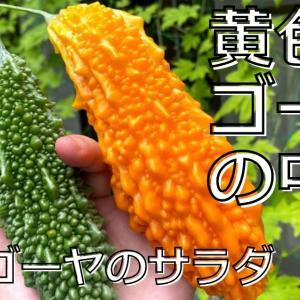 【動画作成】初めて食べる黄色いゴーヤ!!緑のゴーヤと鮮やかサラダを作る