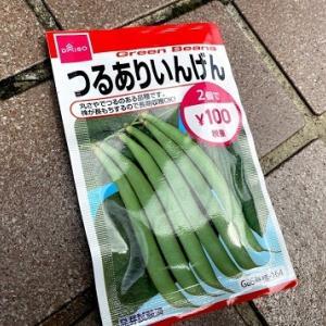 【ダイソー種】つる有りいんげんが伸びてきた!庭の手すりに這わせて緑の柵作戦!!