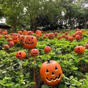 【ハウステンボス】現在ハロウィン準備中!可愛いカボチャの設営風景に秋を感じる