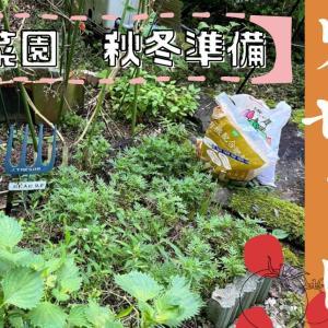 【動画作成】家庭菜園秋冬準備!庭の小さな畑をリセット。マリーゴールドをすき込んでみた