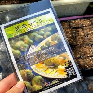 種から芽キャベツに挑戦中!!背丈20センチほど‥収穫までいけるかな?
