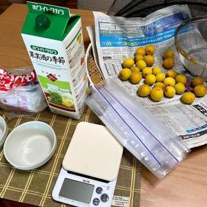 完熟した少量の梅で梅干しづくり(ジップ付きビニール袋使用)梅仕事