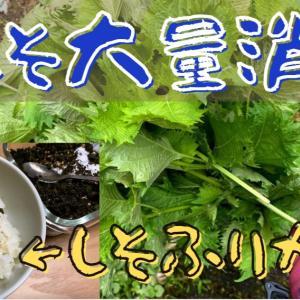 【青紫蘇(大葉)大量消費方法】シソふりかけで簡単ご飯のお供を作りました!
