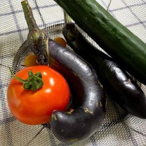 家庭菜園プランターで育てるナス!ようやく収穫✨キュウリと共に採れたてをいただきます