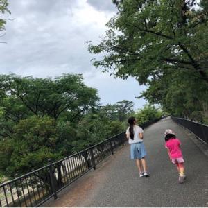 【西宮市】夙川オアシスロードはセミや野鳥の観察ロード!