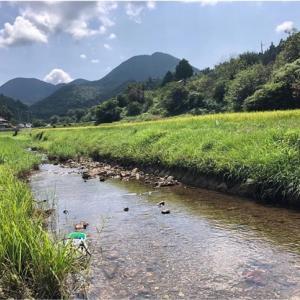 【丹波篠山】景色が最高!親子で里山の自然に育てられる活動