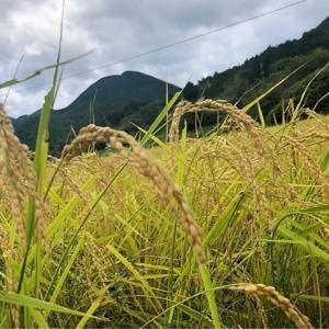 【丹波篠山活動記録】「無農薬米」きれいな自然環境で育つお米を子どもたちに!