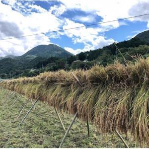【無農薬栽培米】試食販売予定しています!丹波篠山の自然に囲まれて