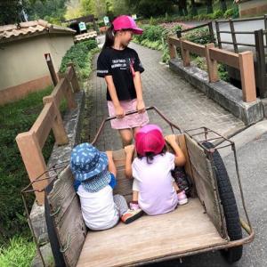 【ユニトピアささやま】丹波篠山のキャンプはここ!アスレチックで子どももいっぱい遊べる
