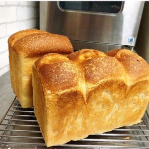 【自家製酵母パン】食パンとバゲットはふわもちの「酒種」