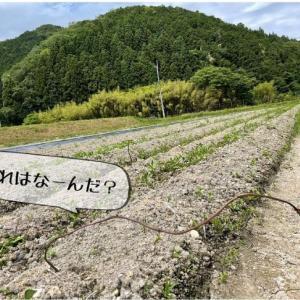 『黒豆クッキング』丹波篠山と食でつながる企画【お料理レッスン】