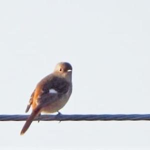 冬鳥たちが飛来し始めました。