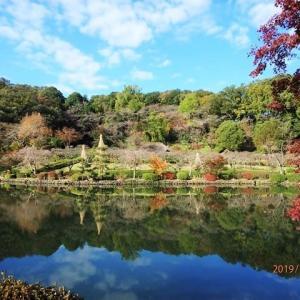 薬師池公園 紅葉を観ながらぶらり散策