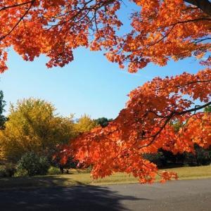 晩秋の国営昭和記念公園の現状、