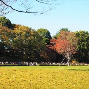 皇居 大嘗宮を参観 2