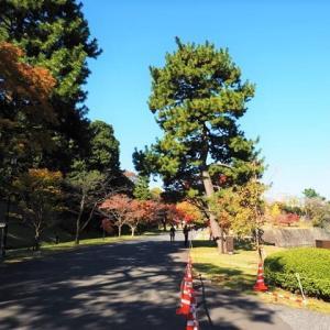 皇居 大嘗宮を参観 1