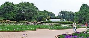 水無月園 花菖蒲 4