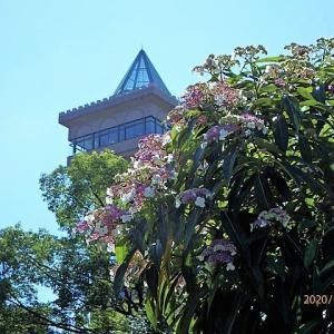 グリーンタワー相模原(展望塔)と夏の花たち