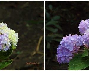 麻溝公園の立秋の花たち