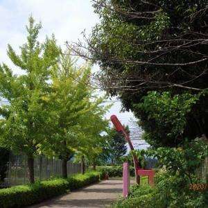 麻溝公園の初秋の風景